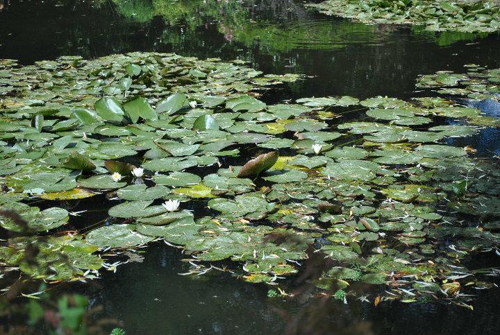 Monet;s Garden